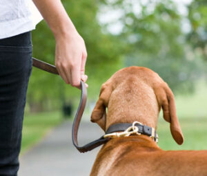 Caregivers and Pets - Liability, Home Care Agency in St. Louis
